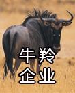 """bob软件荣获""""2020年度牛羚企业""""称号"""
